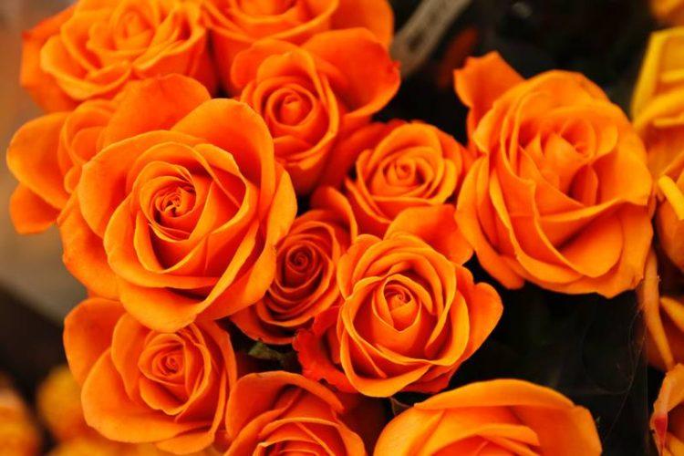 Manisa Çiçek Festivali
